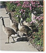 Garden Geese Parade Wood Print by Susan Herber