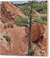 Garden Of The Gods  - The Name Says It All Wood Print by Christine Till