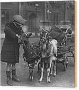 Goat Cart Wood Print by Fox Photos