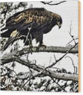 Golden Eagle Watches Wood Print by Don Mann