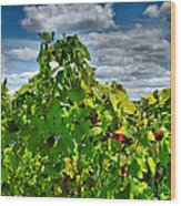 Grape Vines Up Close Wood Print by Steven Ainsworth