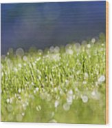 Grass, Close-up Wood Print by Tony Cordoza