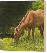 Grazing Horse Wood Print by Charuhas Images
