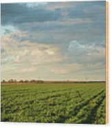 Green Field With Clouds Wood Print by Topher Simon photography
