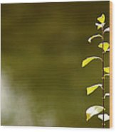 Green Morning Wood Print by LeeAnn McLaneGoetz McLaneGoetzStudioLLCcom