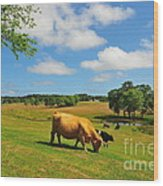 Green Pasture Wood Print by Catherine Reusch  Daley