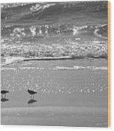 Gulls Taking A Walk Wood Print by Cindy Lee Longhini
