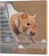Hamster Wood Print by Tom Gowanlock