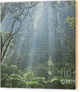 Hawaiian Rainforest Wood Print by Gregory Dimijian MD