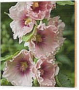Hollyhock (alcea Rosea) Wood Print by Dr Keith Wheeler