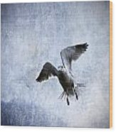 Hovering Seagull Wood Print by Carol Leigh
