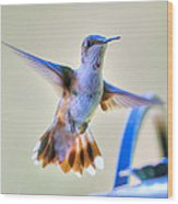 Hummingbird At The Feeder Wood Print by Shirley Tinkham
