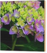 Hydrangea Beauty Wood Print by Valia Bradshaw