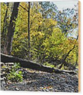 If A Tree Falls Wood Print by Bill Cannon