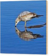 Juvenile Ring-billed Gull  Wood Print by Tony Beck