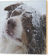 Keepstone Snows Wood Print by Heather Jett