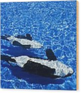 Killer Whales Wood Print by Dave Fleetham - Printscapes