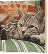 Kitten Lying On Striped Couch Wood Print by Kim Haddon Photography