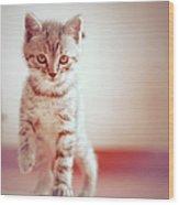 Kitten Walking On Floor Wood Print by Alberto Cassani