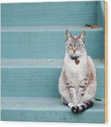 Kitty On Blue Steps Wood Print by Lauren Rosenbaum