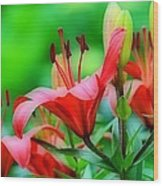 Lilies Ascending Wood Print by Fraida Gutovich