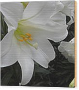 Lilies Wood Print by Silvie Kendall