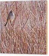 Little Sparrow Wood Print by Sabrina L Ryan