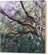 Live Oak Wood Print by Christy Usilton