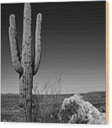 Lone Saguaro Wood Print by Chad Dutson