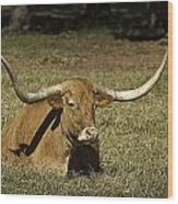 Longhorn Cow Resting In Grass Wood Print by M K  Miller