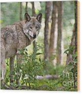 Looking Back Wood Print by Michael Cummings