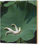 Lotus Leaf--castoff IIi Dl060 Wood Print by Gerry Gantt