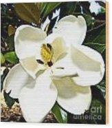 Magnolia Wood Print by Clinton Lundberg
