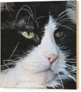 Maine Coon Face Wood Print by Art Dingo