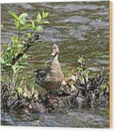 Mallard Duckling Rest  Wood Print by Neal Eslinger