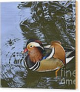 Mandarin Duck 04 Wood Print by Arik Baltinester