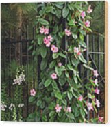 Mandevilla Vine With Pink Flowers Wood Print by Darlyne A. Murawski