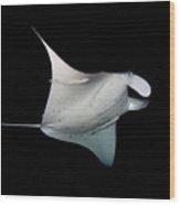 Manta Ray Wood Print by James R.D. Scott