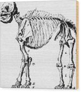 Mastodon Skeleton Drawing Wood Print by Science Source
