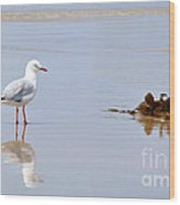 Mirrored Seagull Wood Print by Kaye Menner