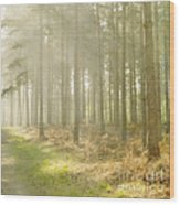 Misty Sunrise Wood Print by Paul Grand