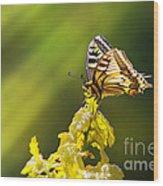 Monarch Butterfly Wood Print by Carlos Caetano