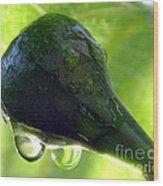 Morning Dew Figs Wood Print by Karen Wiles