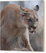 Mountain Lion Wood Print by Paul Ward
