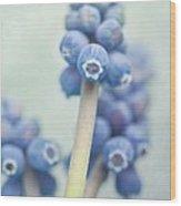 Muscari Wood Print by Priska Wettstein