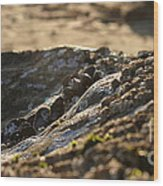 Mussels Sunset Wood Print by Henrik Lehnerer