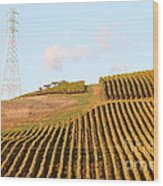 Napa Valley Vineyard . 7d9066 Wood Print by Wingsdomain Art and Photography