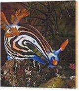 Nudibranch Wood Print by Matthew Oldfield