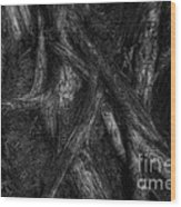 Old Silvery Roots Wood Print by David Gordon