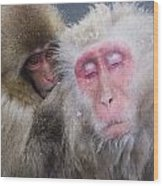 Older Snow Monkey Being Groomed By A Wood Print by Natural Selection Anita Weiner